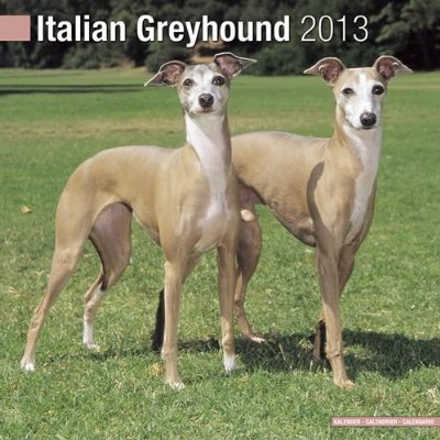 Petprints Italian Greyhound Calendar