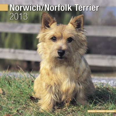 Petprints Norwich/Norfolk Terrier Calendar